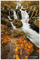 Autumn at Dark Hollow Falls