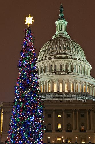 US Capitol Christmas Tree 2011