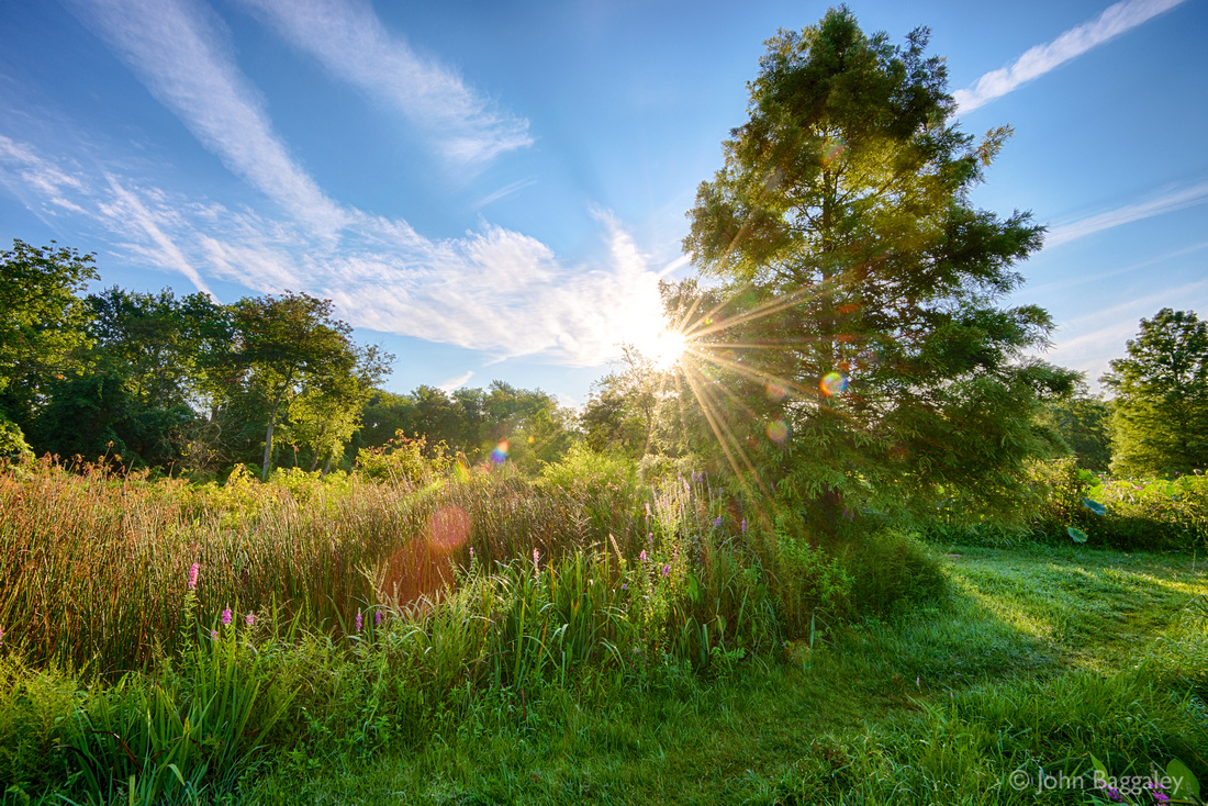 """August sunrise at Kenilworth Aquatic Gardens in Washington, DC, featuring blue skies and a sunburst (also known as a """"sun star"""")."""