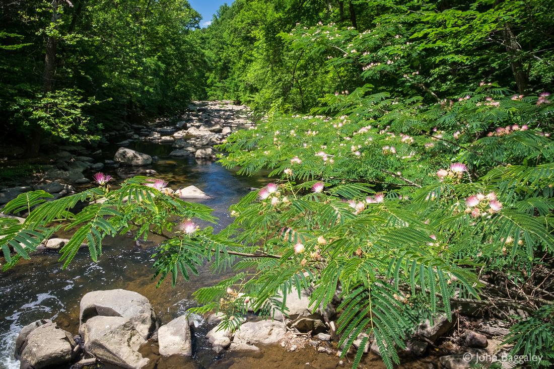 Rock Creek Blossoms 1