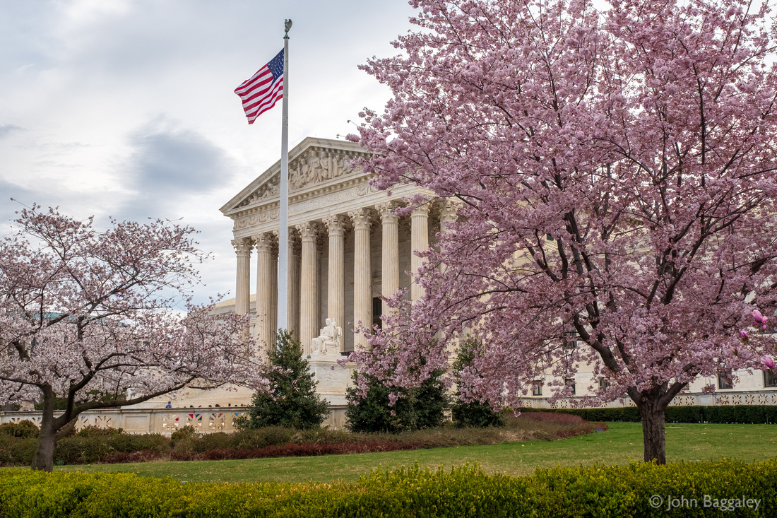 Supreme Court and Cherry Blossoms