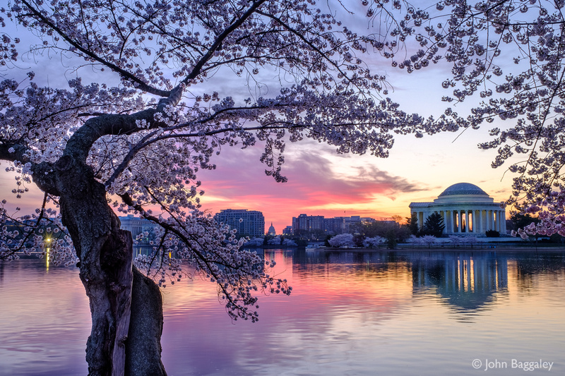 Purple Morning Skies and Blossoms over Jefferson 2