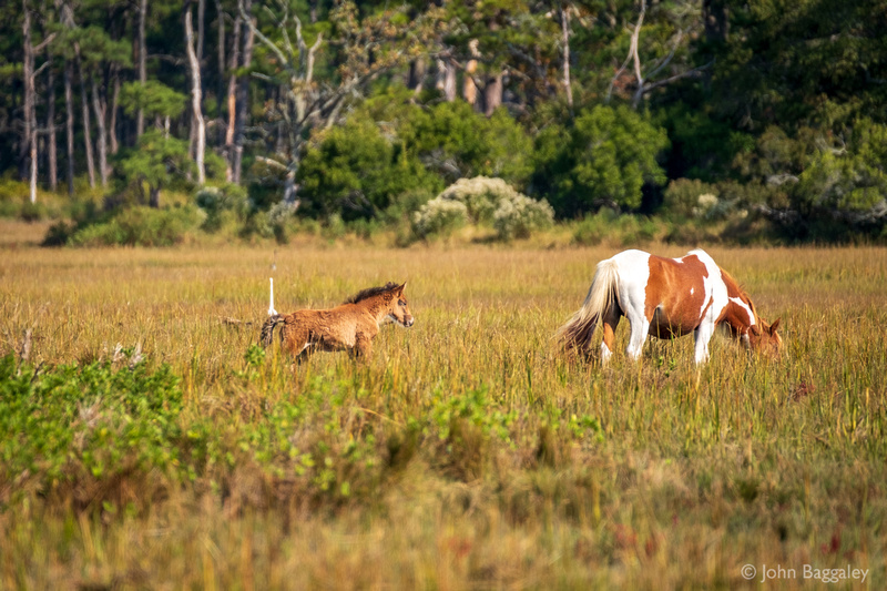 Wild Ponies 3
