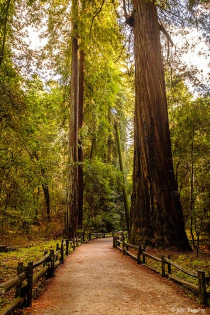 A path among tall trees