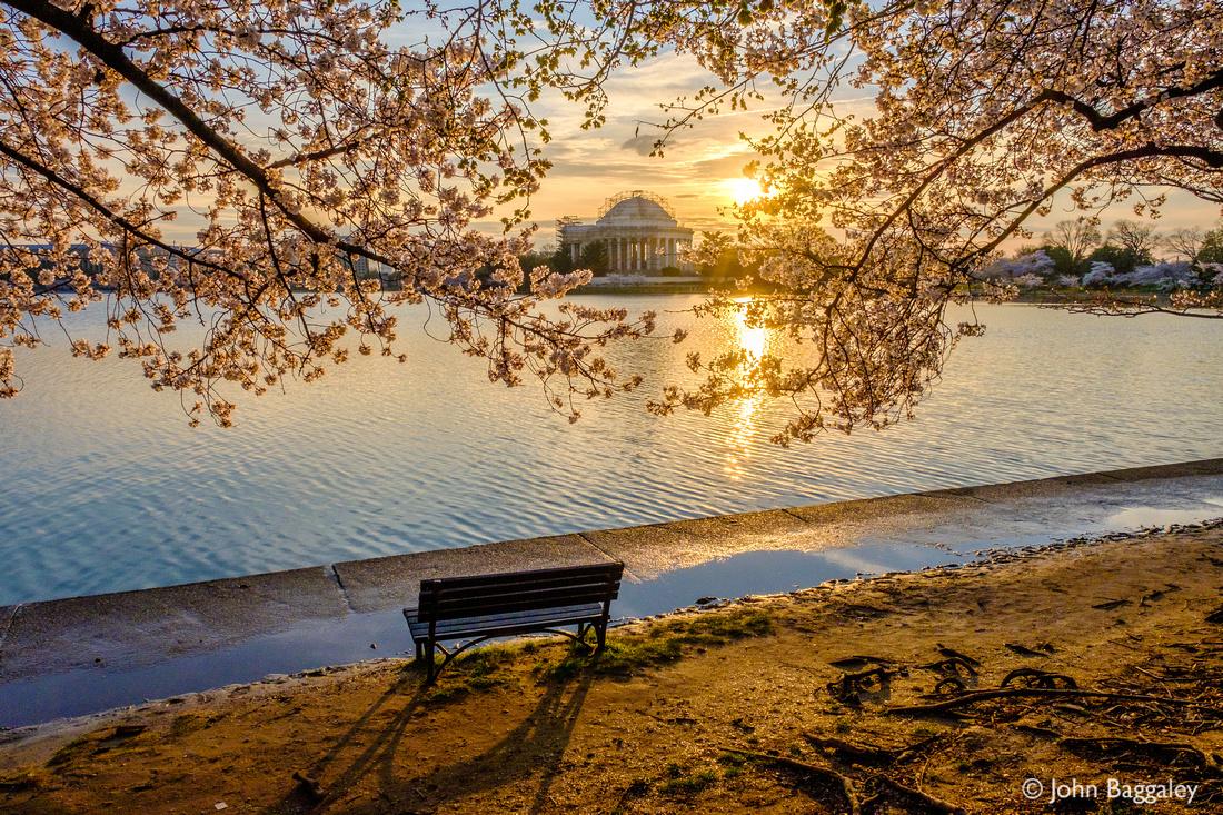 Sunrise and cherry blossoms (horizontal)