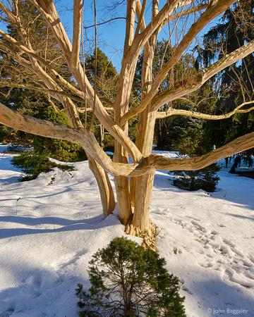 A Tree's Embrace