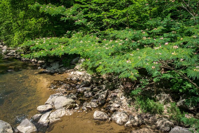 Rock Creek Blossoms 2