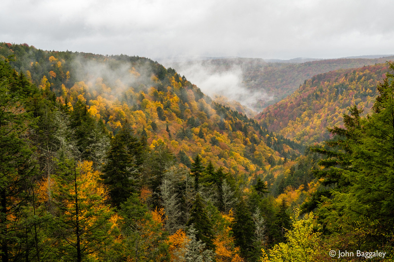 Autumn in Blackwater Canyon