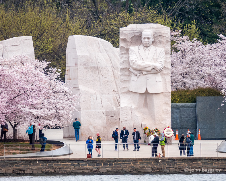 Springtime at the Martin Luther King Jr. Memorial