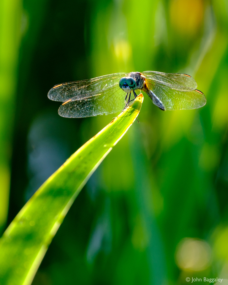 Dragonfly Ready to Launch