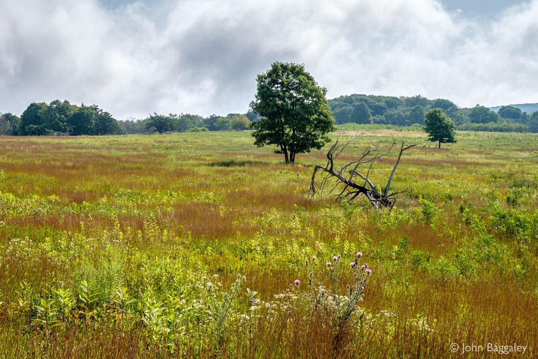 Summer in Big Meadows