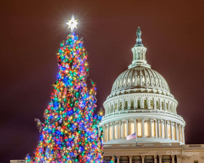 Close-up of the 2016 United States Capitol Christmas Tree